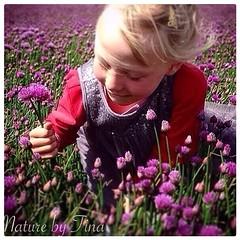 Flowers (NaturebyTina) Tags: wind warm blst worldpic scandinavia world europe fyn danmark denmark smile flower flowers field purple girl