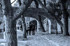 Paseando por el Castelo de San Jorge. Lisboa (raperol) Tags: lisboa lisbon blancoynegro paseo arbol arcos alairelibre arquitectura 50d 2015