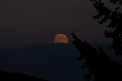 Rise of the Moon (oliko2) Tags: moonrise moon evening freiburg trees mountain sky clouds silhouettephotography silhouette nikond7100 tamron70300 city summer blackforest germany rawtherapee