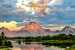 Birds over the Tetons Early Morning Light (rich wich) Tags: birds teton