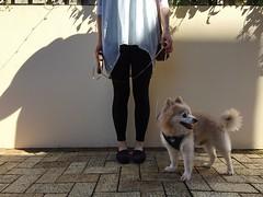 Saturday Morning Walk with My Dog (eeemmmiii) Tags: saturdaymorning walk mydog