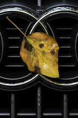 HMM! Autumn Audi (suzanne~) Tags: macromondays planestrainsandautomobiles car wet leaf autumn audi macro outdoors rain raindrop