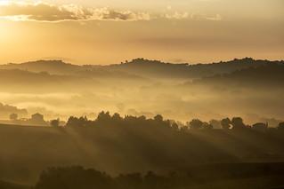 Morning fogs (12072)