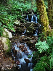 (Linayum) Tags: fragasdoeume water agua corrientedeagua nature naturaleza beautiful plants plantas cascada linayum spain espaa galicia