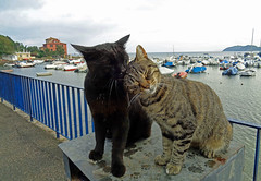 A great love (baratti) Tags: italy tuscany piombino baratti populonia harbour cats love