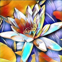 Digital Waterlily (AngelVibeDigital) Tags: waterlily lily dukegardens digitalwaterlily colorful blossom art paintedflowers lilies photography nikon digitalart nikonp900