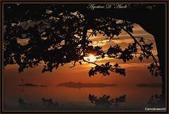 Tramonto tra rami e foglie... con riflesso - Settembre-2016 (agostinodascoli) Tags: tramonto sunset agostinodascoli cianciana sicilia travel viaggi nikon nikkor landscape nature texture sole paesaggi alberi foglie