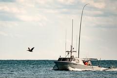 Follow the leader? (ChiDN) Tags: fishingboat fuji fujifilm fujifilmxt2 fujinonxf100400mmf4556rlmoiswr hatteras2016 northcarolina obx outerbanks pelican xt2