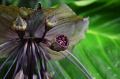 NYBG_142 (chiang_benjamin) Tags: nybg newyorkbotanicalgarden ny nyc bronx newyorkcity flowers trees arboretum plants green nature summer