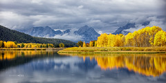 Discovering Gold (glness) Tags: tetons grandtetons grandtetonnationalpark nationalpark snakeriver oxbowbend aspens fall autumn fallcolors leavesofgold reflection mountains river storm peakcolor gold yellow gregness sunlitleaves brilliant autumnsplendor season fallseason thewest jacksonhole wyoming