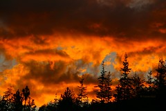 Amazing (CLloyd Photos) Tags: sunset sky creation clouds trees orange