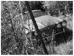 Prowl (r a p h y) Tags: flowers bw plants white black green grass leaves cat photography purple lego curves gray international jag form jaguar 1941 marigolds int xj swoopy