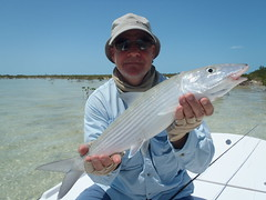 """Beautiful Bonefish • <a style=""""font-size:0.8em;"""" href=""""http://www.flickr.com/photos/71082199@N06/8615757069/"""" target=""""_blank"""">View on Flickr</a>"""