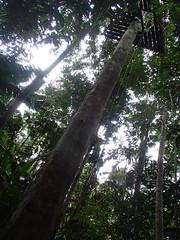 P4020130 (Vagamundos / Carlos Olmo) Tags: colombia leticia amazonas colombiano vagamundos carlosolmo 2013 reservanatural tanimboca