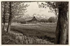 Antiquity (dbushue) Tags: trees mountains nature barn landscape nikon antique valley wyoming jacksonhole 2012 grandtetonnationalpark coth gtnp mormonrow supershot antelopeflatsroad coth5 tamoultonbarn