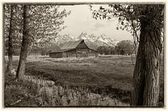 Antiquity (dbushue) Tags: trees mountains nature barn landscape nikon antique valley wyoming jacksonhole 2012 grandtetonnationalpark coth gtnp mormonrow supershot antelopeflatsroad coth5 tamoultonbarn