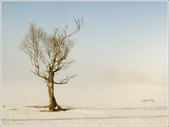 20130409. Dead tree in fog. 8032. (Tiina Gill (busy)) Tags: morning winter snow tree fog landscape dead estonia vanagram