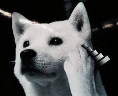 I <3 the Softbank dog.