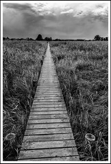 The way to nowhere (ale_brando) Tags: denmark blackwhite cloudy path dk marsh dull 2012 frederikshavn woodenpath niksoftware nikonfx silverefexpro northdenmarkregion