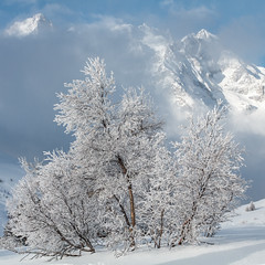 Fresh snow (Michel Couprie) Tags: cloud snow france alps tree montagne alpes canon eos pass 7d neige nuage arbre col montain meije hautesalpes lautaret ef35f14l 100commentgroup