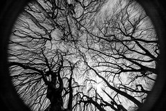 _MG_9920-44 (k.a. gilbert) Tags: trees sky bw vertical outside outdoors branches naturallight newport handheld mansion fullframe 116 theelms uwa naturalvignette tokina1116mmf28 canon5dc