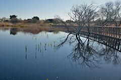 TablasDaimiel-022 (Ethoo) Tags: madrid espaa agua laguna excursion humedal tablasdaimiel nikones ethoo