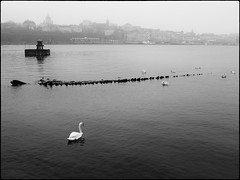 DSCF2082 (Per Spektiv) Tags: bw nature water birds animals museum sweden stockholm cityscapes silverefexpro2