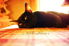 Bobby (Krista Cordova Photography) Tags: black sunshine yellow cat blackcat table feline bobby cateyes yelloweyes carnivore