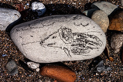Stone dog (allybeag) Tags: dog beach stone sketch drawing seacoal
