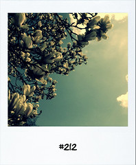"#DailyPolaroid of 28-4-13 #212 • <a style=""font-size:0.8em;"" href=""http://www.flickr.com/photos/47939785@N05/8695996245/"" target=""_blank"">View on Flickr</a>"