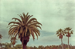 visit florida (BryanBowman) Tags: tree film 35mm vintage photography florida palm