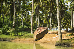 (Was!m) Tags: cruise trees india green nature boat nikon coconut kerala tamil nadu d3100