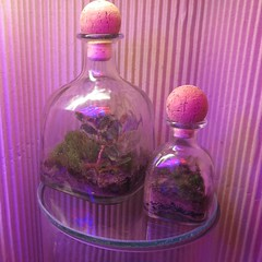 IMG_3181 (mobile_gnome) Tags: moss terrarium