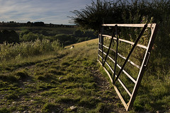 Gate (Dick Dixon 67) Tags: gate twisted sheep countryside