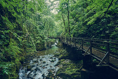 Along the Kamanik stream (ir0ncevic) Tags: kamanik stream spring nature green forest vrbovsko croatia nikon nikkor hrvatska