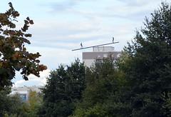 Grten der Welt (Gardens of the World) (Bjrn O) Tags: berlin grtenderwelt balance wippe dach roof