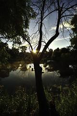 tang du Zich Molsheim, France. (boomer_phil) Tags: contrejour extrieur eau nikon d500 reflets water couleurs soleil arbres trees verdure nature ciel nuages