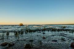 20160828-IMG_7741-WM (Pamela McLellan Zmija) Tags: pamelamclellanzmija saugeenshores portelgin sunset beach lakehuron goblesgrove sunshine