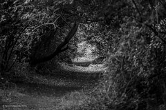 Through the clearance (norm.edwards) Tags: walk blackandwhite bw clearance autumn 2016 texture tress branches light dark contrast leaves
