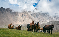 Kyrgysztan-6896-2 (EbE_inspiration) Tags: kyrgyzstan mountain outdoor travel hills grass horse horses nikon d7100 sigma world outside