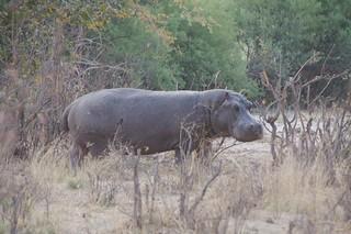 Namibia Dangerous Game Safari - Caprivi Strip 27