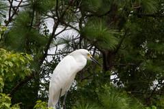 Gatorland-0756.jpg