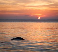 August sunset (Antti Tassberg) Tags: auringonlasku aurinko kirkkonummi landscape meri nature outdoor sea seascape skrobban skrubb storamickelskren sun sundown sunset uusimaa finland