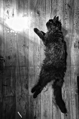 BONY'S LIGHT (didi tokaoui) Tags: didi tokaoui photo bony light noir et blanc black and white