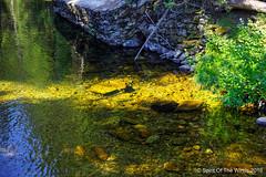 Lake Fork Creek (jimgspokane) Tags: lickcreekroad lakeforkcreek idahostate forests trees mountains idahomountains camping