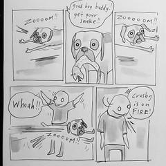Zoom! (starheadboy) Tags: billiam perfectabernathy crosby boxer dog puppy comic cartoon
