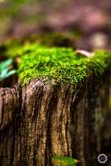 Der einsame Baumstamm (stefanueberlein) Tags: wald moos baumstamm hessen holz nikon wood forest natur nature landscape capture focus