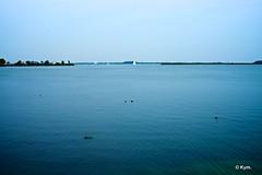 Quiet day (Kym.) Tags: bird blue coot harbour quietday sea view walk walking walkingbymyself waterbird white yacht amsterdam thenetherlands