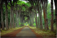 """verso il mare"" (santi_riccardo) Tags: pisa san rossore extenuta parco pineta"