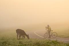 Misty morning encounter (tmo222) Tags: morning sunrise wildlife deer candid fog mist nature